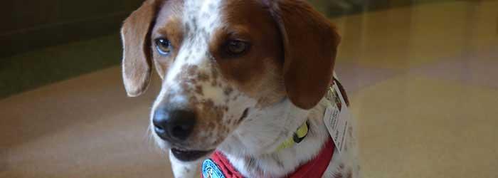animal therapy program capital regional medical center